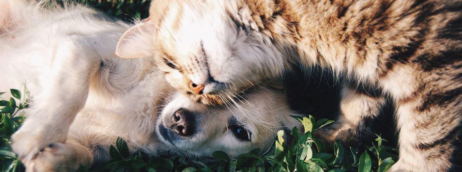 Haustier-Mythen: Was steckt dahinter?