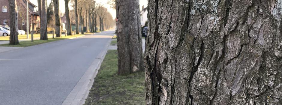 Baumfällung in der Brocker Straße
