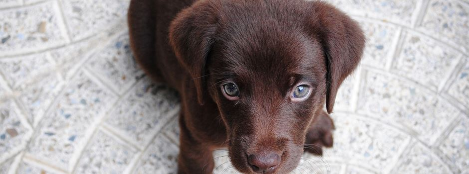 5 Orte für Hunde in Augsburg