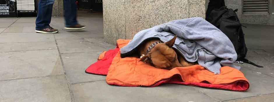 In Wiesbaden gibt es immer mehr Obdachlose