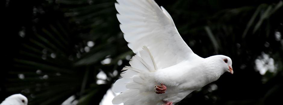 Augsburger Friedensfest - Das ist im Taubenschlag geboten!