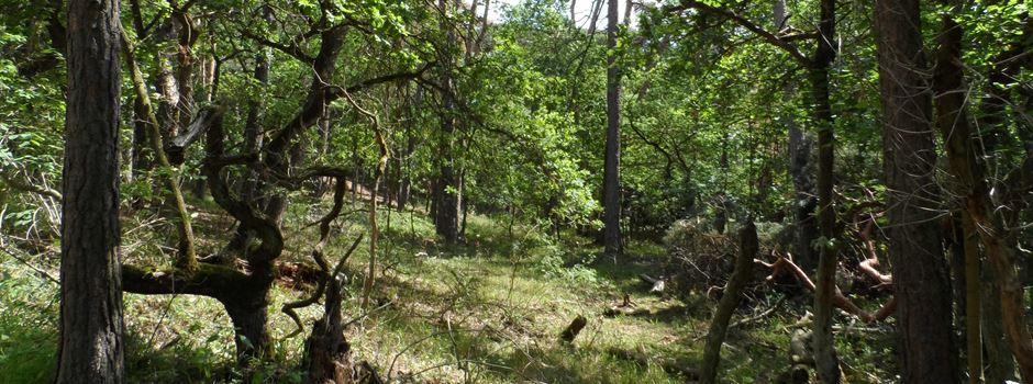 Warum der Lennebergwald so unaufgeräumt ist