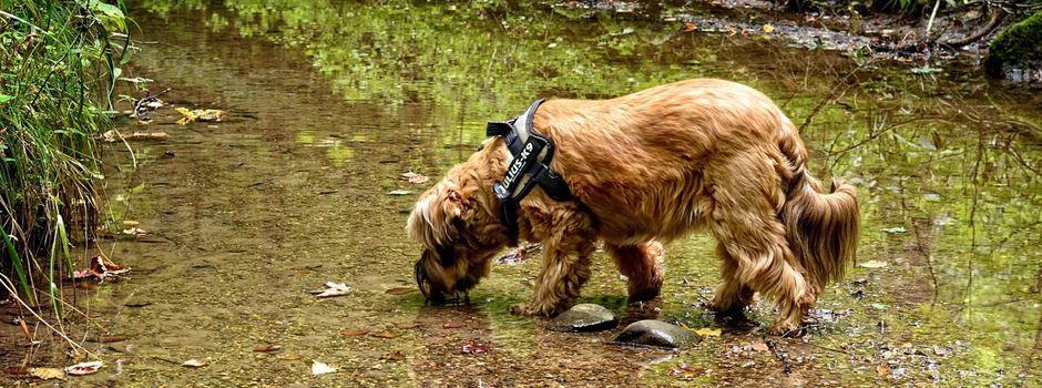 Vorsicht! Hunde nicht trinken lassen