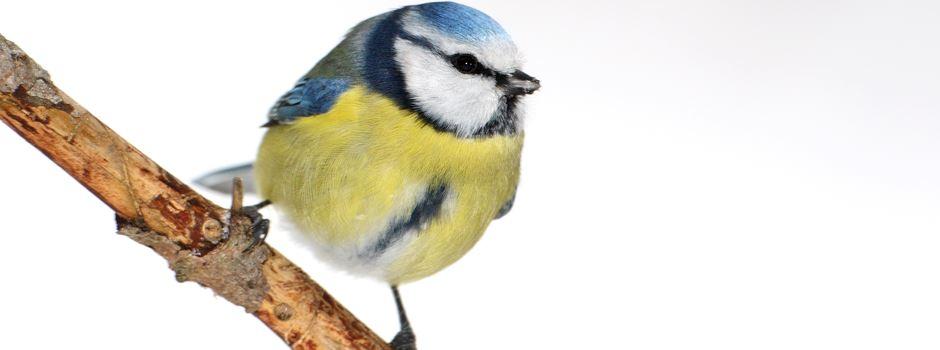 """""""Stunde der Wintervögel"""" startet"""