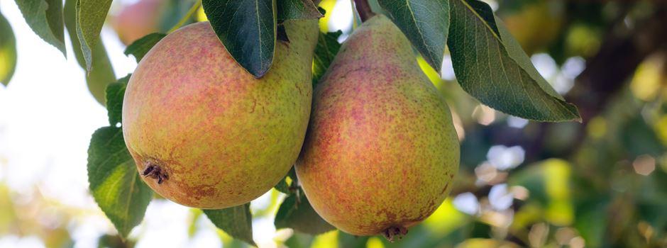 Auf frischer Tat ertappt: Diebe klauen 16 Kilogramm Obst