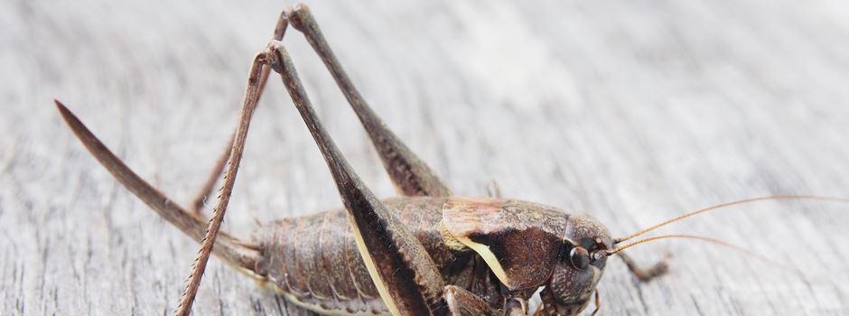 Insektenriegel jetzt auch in Mainz