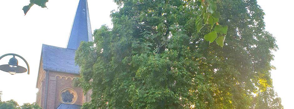 Kastanienbaum muss gefällt werden