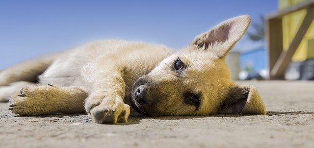Augsburger Studierende entwickeln Beinprothesen für Hunde