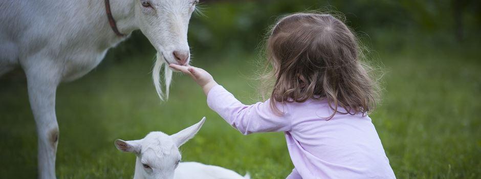 Tierstreicheln & Puppenspieltage – 5 Events für Kinder im Oktober