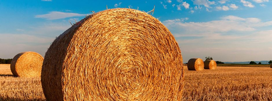 Thema Landwirtschaft