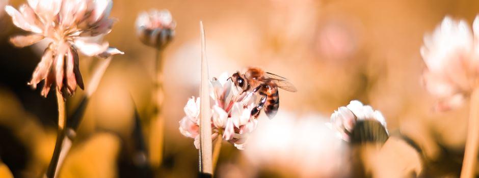 Pate der Augsburger Bienenweide werden und selbst Bienen retten
