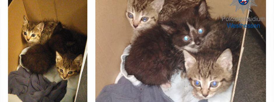 Katzenbabys in Mülleimer am Platz der Deutschen Einheit gefunden