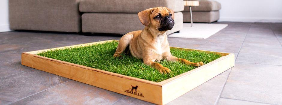 Das erste Hundeklo aus echtem Rasen von CARNILO aus Niederkassel