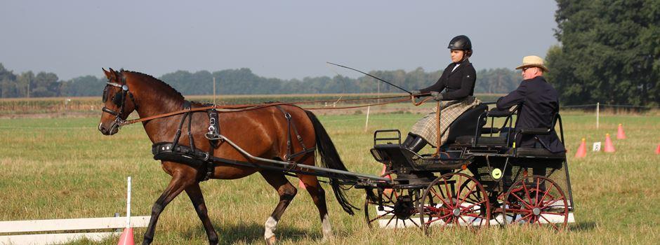Schnupperkurs Kutsche-Fahren für alle interessierten