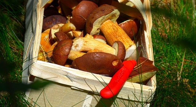 Ab in die Pilze: Pilze sammeln in und um Augsburg