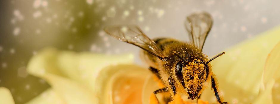 Bienensterben in Bayern – Fakten, Gründe, Folgen