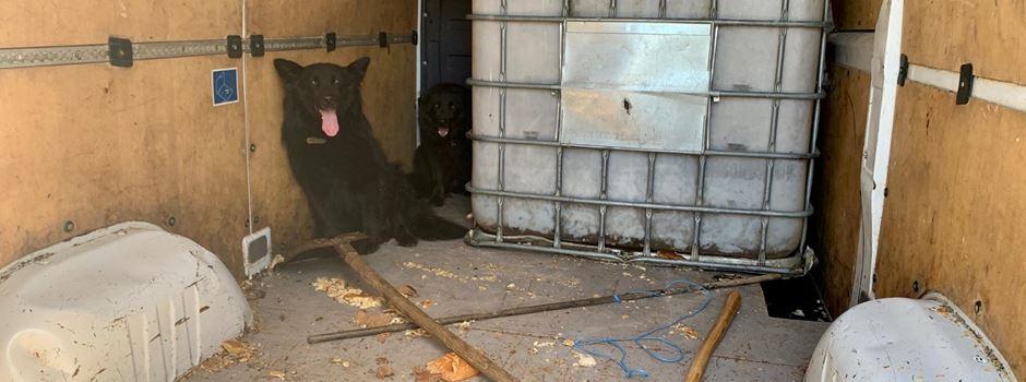 Hunde zwischen Dreck und Gerümpel in Transporter gesperrt