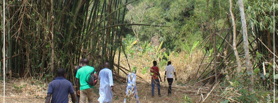Bambus für Mensch und Umwelt