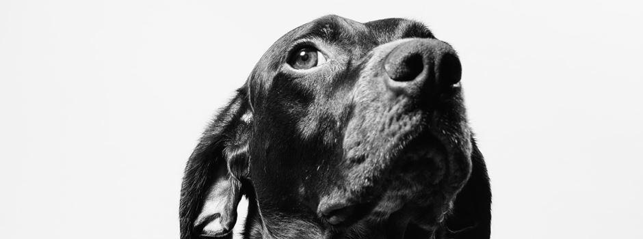 Dogandliving – Neues Fachgeschäft für Hunde eröffnet