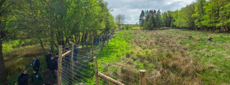 Neues Elchgehege im Wildpark eingeweiht
