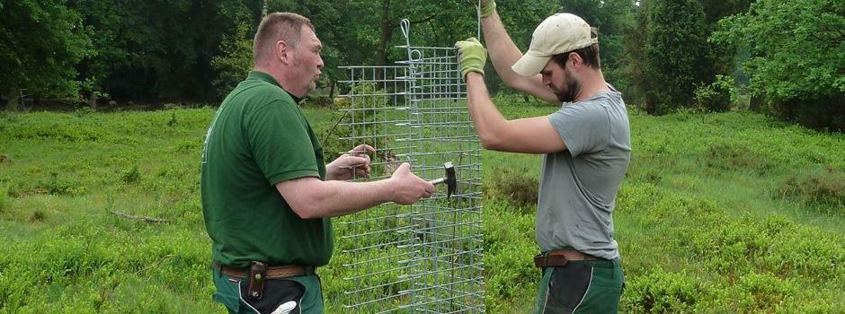 Wenn Eichen hinter Gittern landen: Verbiss-Schutz für den Klimaschutz