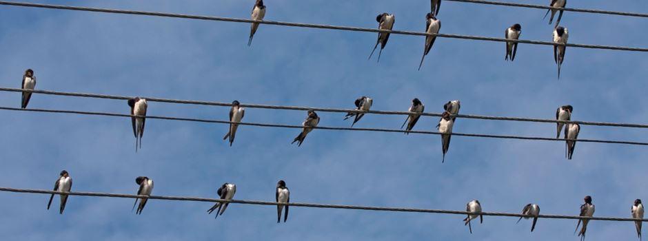 Sind die Vögel vorzeitig aus Mainz verschwunden?