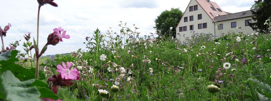 Naturschutz am Feldrand: Immer mehr Blühstreifen rund um Mainz