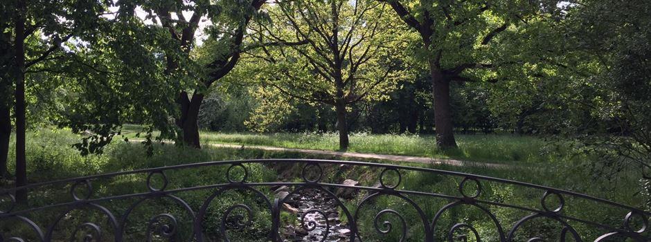 Wie die Bäume im Schlosspark über den Sommer kommen