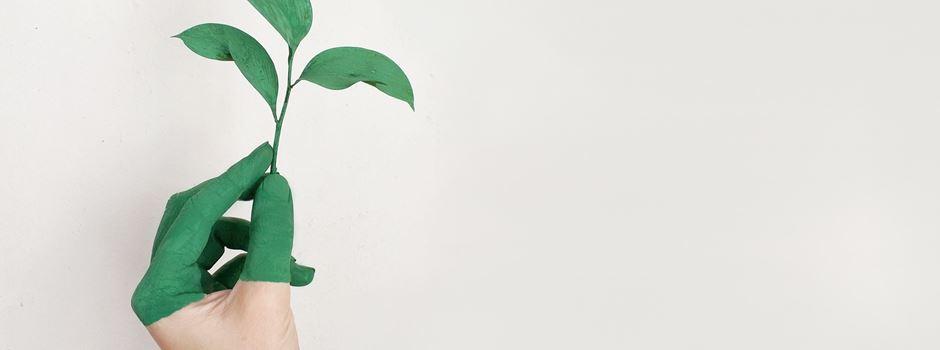 Greenoffice – 3 Events zum Thema Nachhaltigkeit in Augsburg