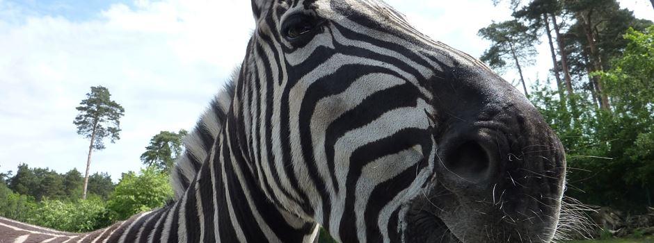 Tierparks öffnen
