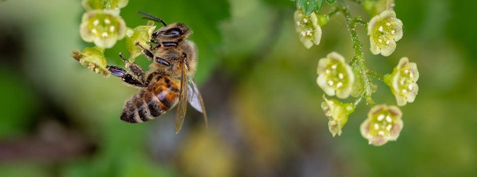 Rettet die Bienen – große Blühflächen-Offensive für Augsburg