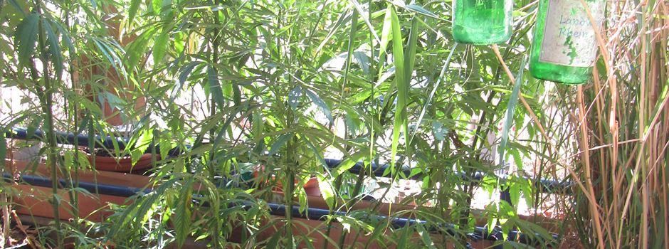35 Marihuanapflanzen auf Altstadt-Balkon sichergestellt