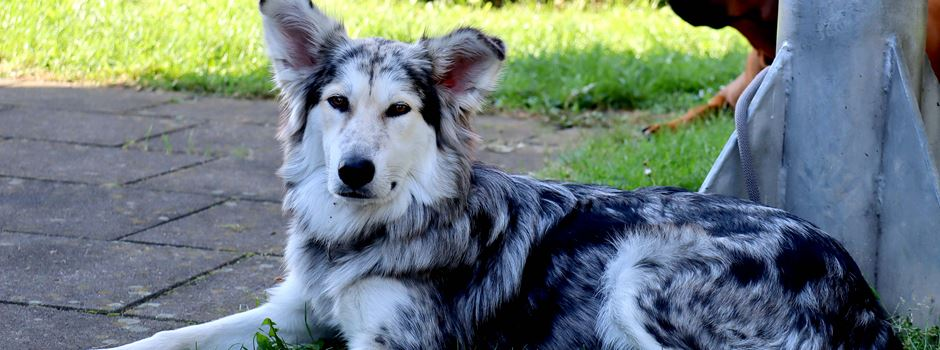 Hundesportverein: Erster großer Wettbewerb nach Corona-Zwangspause