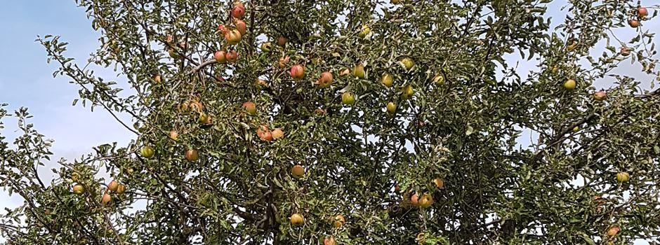Texte und Musik rund um den Apfel