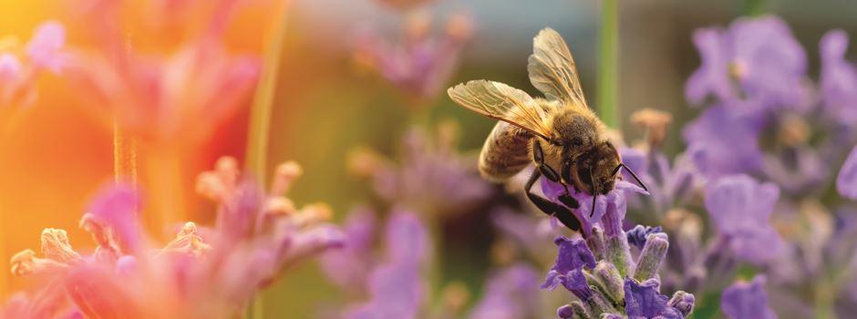 """Für eine größere Artenvielfalt: Mit der Initiative """"Bienen Helfen!"""" wurden 4.500 m² Blühfläche bei Mainz angepflanzt!"""