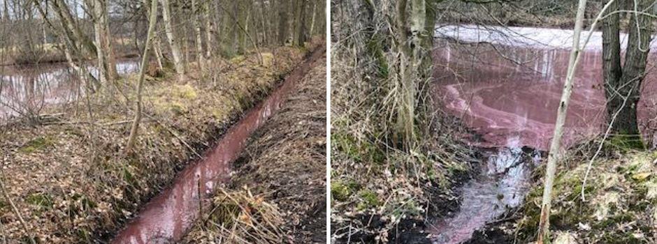 Burgunderblutalge: Weiterhin Vorsicht bei roten Gewässern
