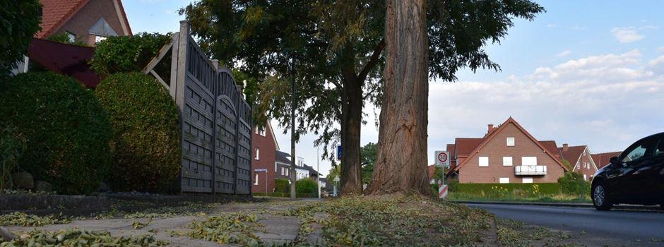 Bäume erleiden bereits langfristige Hitzeschäden