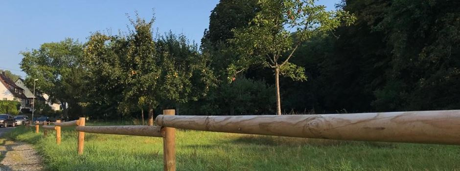 Baumpaten sollen Wiesbaden grüner machen