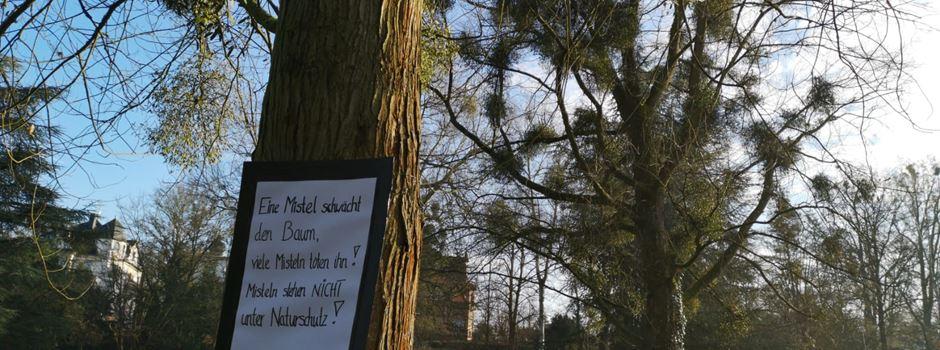 Was hinter den Plakaten an Wiesbadener Stadtbäumen steckt