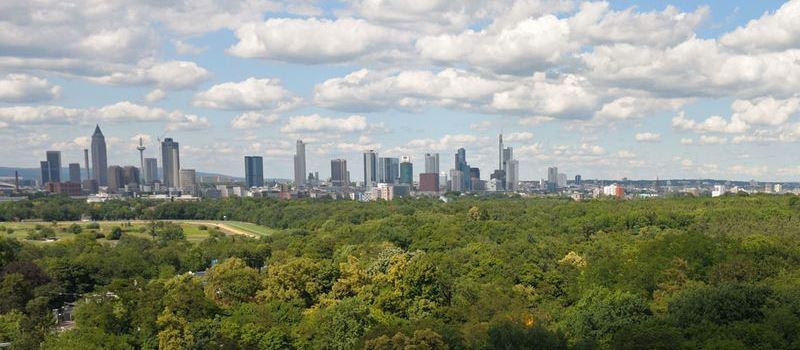 Stadtwald: 97 Prozent der Bäume sind geschädigt