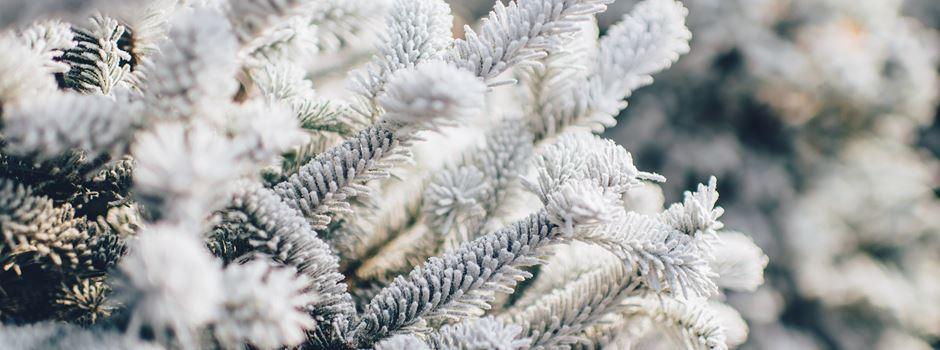 5 schöne Dinge, die ihr an einem Sonntag im Winter machen könnt