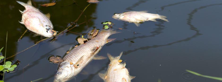 Störfall in Kläranlage sorgt für tote Fische
