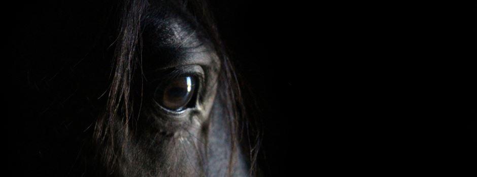 Verletzte Pferde: Polizei mit ersten Ergebnissen