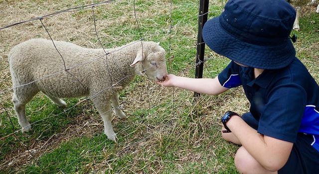 Tiere erleben mit Kindern in Augsburg