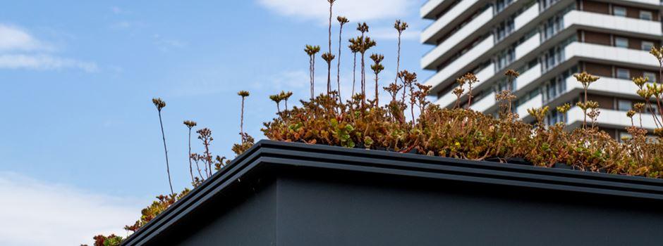 Blumen auf dem Haltestellen-Dach: Auch in Frankfurt denkbar?