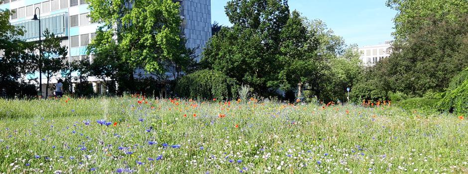 Gibt es diesen Sommer mehr Bienenwiesen in Wiesbaden?