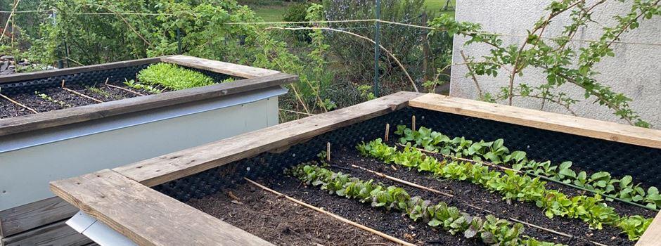 Puls!-Tipps für einen schönen Garten und Balkon