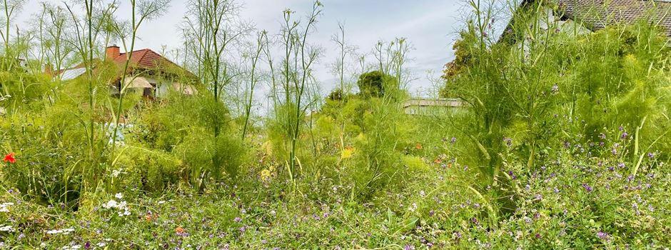 Blühwiese macht sich