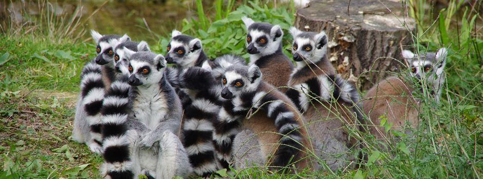 Das erwartet euch am Zootag 2021 in Augsburg