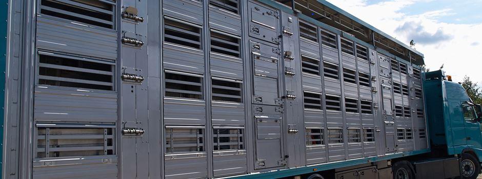 Land NRW setzt Tierexporte in Drittstaaten aus - Rhein-Sieg-Kreis begrüßt die Entscheidung des Landes